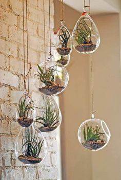 plantes succulentes dans des pots suspendus en verre