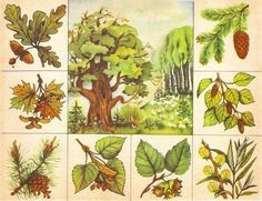 3d Paper, Cactus Plants, Montessori, Painting, Colors, Day Care, Wild Life, Plant, Kid