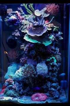Rimless cube aquarium