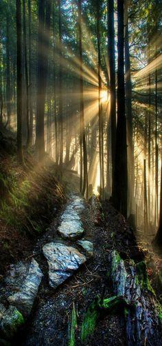 Sunrise on 'My path' Ketchikan Forest's sunbeams, Alaska by Carlos Rojas`