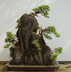Bonsai cliff mountain