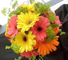 WED-145b  Bright and joyful for your day, this handtied bouquet showcases Gerbera Daisies with Bupleurum.