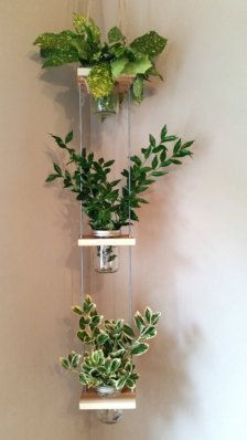 beautiful hanging plants ideas for home decor – Page 15 of 42 – SooPush hanging plants, indoor plants, outdoor plants Window Hanging, Diy Hanging, Hanging Planters, Wall Hanging Plants Indoor, Mason Jar Planter, Hanging Mason Jars, Leafy Plants, Tomato Plants, Shade Plants