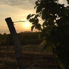Lever de soleil sur les #vignes @chateaupenin