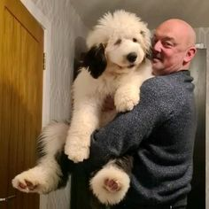 Mabel the talking old english sheepdog fills you on her daily antics- she is cosy Corner fragrances newest teamie Cosy Corner, Old English Sheepdog, Fragrances, Old Things, Cozy