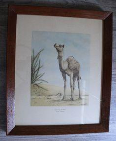 Vintage A. Maalouf Camel Print Saudi Arabia Dessert Scene in Wooden Frame #Vintage $29.99