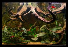 Riverbank Project (grow out tank) - Tropical Fish Forums at the Age of Aquariums