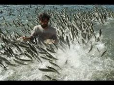 Треш на рыбалке, подборка нарезка видео 2016