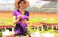 Vídeo: Como cultivar flores comestíveis