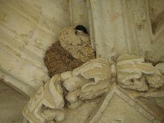 zwaluwnest boven een kapiteel in de abdij van Fontevraud  ( Frankrijk )