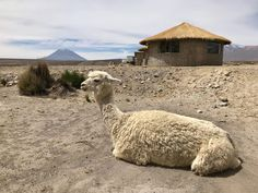 Mini Volcano as seen from Salinas and Aguada Blanca National Reservation on the way to Arequipa Peru. Photo by Don Trynor. Peru Travel, Volcano, Mini, Pictures, Arequipa, Photos, Photo Illustration, Volcanoes, Resim