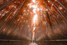 Photograph Kyoto Bamboo Forest by Jimmy Mcintyre on 500px