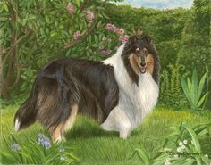 """New Limited Edition Collie print """"Enchantment"""" by Cindy Alvarado"""