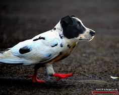 Dogeon. | 28 Unsettling Animal Mashups That Should Probably Never Have Happened