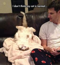 What's a normal cat?