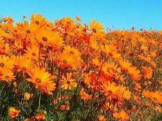 Image result for skilpad namaqua national park National Parks, Plants, Image, Planters, Plant, Planting, Planets, State Parks