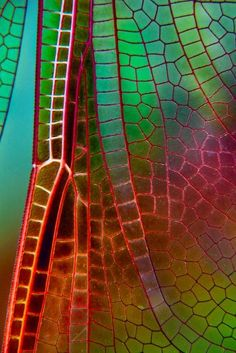 ˚Wing of a dragonfly