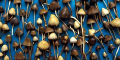 Feeling Blue? Try Some 'Shrooms, Says Science
