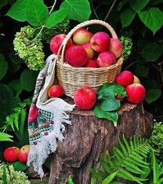 Fruit And Veg, Fruits And Vegetables, Mcintosh Apples, Basket Drawing, Fruits Photos, Apple Baskets, Apple Decorations, Apple Harvest, Fruit Photography