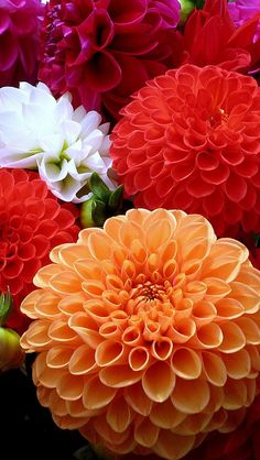 Dahlias - love the red orange and peach color