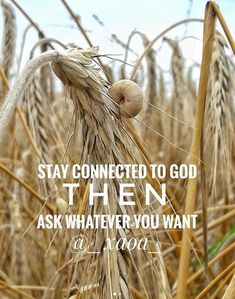 xaoa/''If you remain in me and my words remain in you ask whatever you wish and it will be done for you.''JOHN 15:7