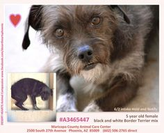 Featured Dog -  6/5/2014 --Status – Hold. NEED ADOPTER OR FOSTER --DESERT HEARTS Animal Compassion. --Phoenix, AZ www.facebook.com/desertheartsphoenix