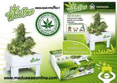WeedBox, el kit de Medussa-Protect que revoluciona tu forma de cultivar marihuana Medussa-Protect S.L lo ha vuelto a hacer y nos presenta su exclusiva WeedBox.Medussa-Protect S.L empresa española fabricante de soluciones innovadoras para horticultura técnica, en cola...