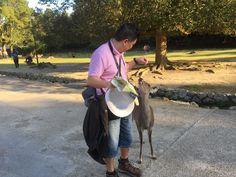 Pleading for snack at Nara Park, Japan