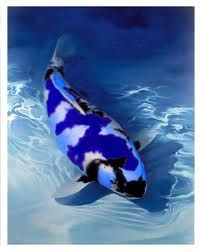 blue koi fish. Cool. I'll take one of these please. Wonder if they come in purple too :)