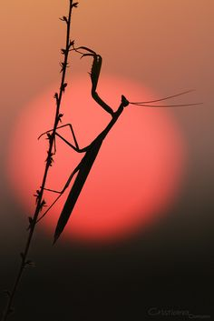 Praying Mantis are awesome creatures. A great thing to have in your garden. Macro Photography, Wildlife Photography, Animal Photography, Sunrise Photography, Beautiful Creatures, Animals Beautiful, Cool Pictures, Cool Photos, Image Nature