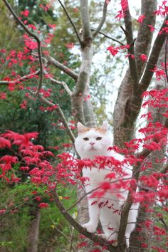 How adorable is #spring! www.digiwriting.com - Shironeko loves spring❤️