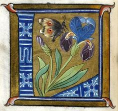 """""""L"""" letter (f°17v) -- Alphabet Book, by French Artist, Paris (France), ca1550 [Walters W.200]"""