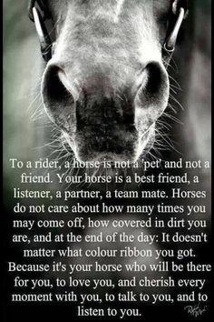 Horse ridding a partnership