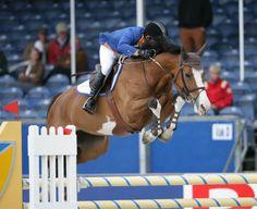 What a cute horse. Love those markings!