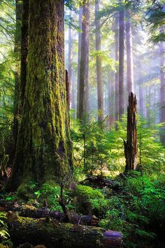 Forest at Sol Duc Falls in Olympic National Forest, Washington.: