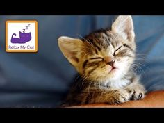 Music Through A Cat's Ear For Relaxation - Relax your cat with this soothing music help restlessness