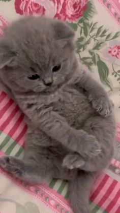 Baby Animals Super Cute, Cute Baby Cats, Cute Little Animals, Cute Funny Animals, Funny Cute, Cute Puppies And Kittens, Kittens Cutest, Baby Kittens, Pugs