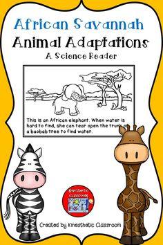 African Savannah Animal Adaptations: A science reader.