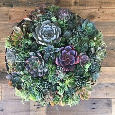 Arrangement has over 75 succulents and weights 37 lbs! Succulent Bowls, Succulent Centerpieces, Succulent Arrangements, Cacti And Succulents, Planting Succulents, Black Planters, Planting Plan, Houseplants, Flora