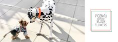 PimpouPet | Ekskluzywne Ubrania dla Psów Dog Wear, Cavalier, Chihuahua, Hollywood, Horses, Gallery, Animals, Clothes, Pug