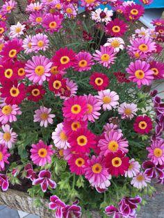 http://www.tokobungafresia.com/p/toko-bunga-jatibening.html
