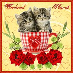 Weekend Gif, Bon Weekend, Happy Weekend, Good Day Quotes, Its Friday Quotes, Blessed Friday, Happy Friday, Weekend Greetings, Kitten Cartoon