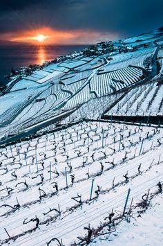 Winter geometry in Lavaux, Switzerland