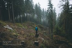 Into the woods by Bokehm0n #Landscapes #Landscapephotography #Nature #Travel #photography #pictureoftheday #photooftheday #photooftheweek #trending #trendingnow #picoftheday #picoftheweek