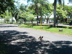 Avenida defronte ao Centro de Assistência Odontológica à Pessoa com Deficiência – CAOE, UNESP - Araçatuba – SP