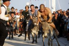 Image result for donkey race Donkey, Sumo, Racing, Wrestling, Sports, Image, Running, Lucha Libre, Hs Sports