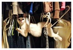 20 Hilarious Photos Of Animals Being Clumsy - Page 2 of 5