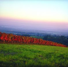 The best way to see #Americana in #autumn like this beautiful shot of #Oregon? Hop in the car for an #fall drive.