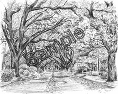 Tree Drawing, The Avenues in Albany, GA 8x10 - leaves fall autumn spring on Etsy, $25.00
