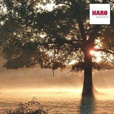 Elgondolkoztatok már ténylegesen, hogy miért hullatják a fák a leveleiket?  A sötét hónapokban az évben, a víz megfagy a talajban, és a fák többé nem tudják felvenni az ásványi anyagokat leveleiknek. Erre az évszakra, a lombhullató fák, már teljesen elvesztik leveleiket az őszre. Ennek köszönhetjük az ősz csodálatos színváltakozásait!   www.dreamfloor.hu www.dreamfloor.hu/hol_vasarolhatok